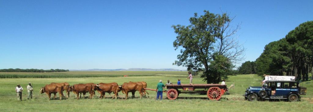 Bueyes tirando de una carreta y de Macondo en Sudáfrica. Foto: argentinaalaska.com